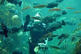 蒙特利湾水族馆