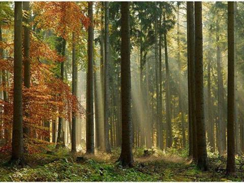 维也纳森林旅游景点图片