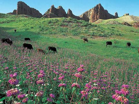 苏格兰牧场旅游景点图片