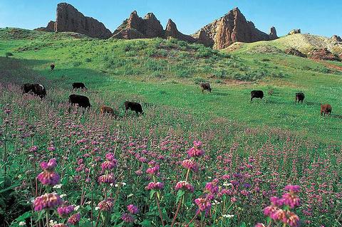 苏格兰牧场的图片