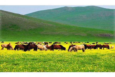 白音锡勒草原牧场