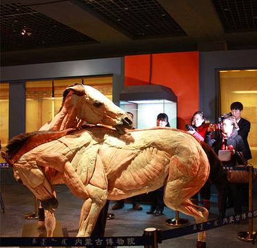 马文化博物馆的图片