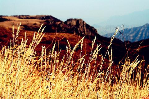 黄草梁风景区