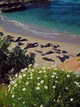 袋鼠岛旅游图片
