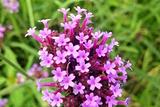 紫海鹭缘浪漫爱情主题公园