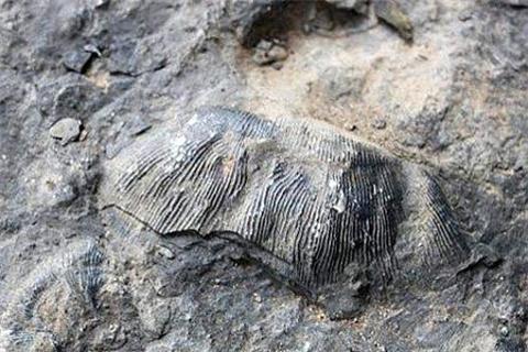 八郎海洋古生物化石群