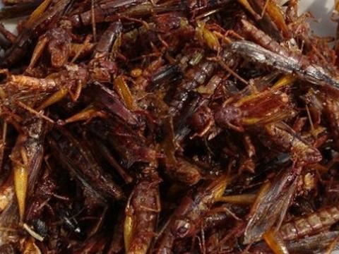 食用昆虫批发旅游景点图片