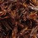 食用昆虫批发