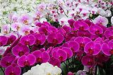 金车兰花园