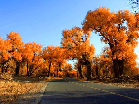 塔里木胡杨林公园旅游景点图片