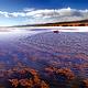 可鲁克湖景区