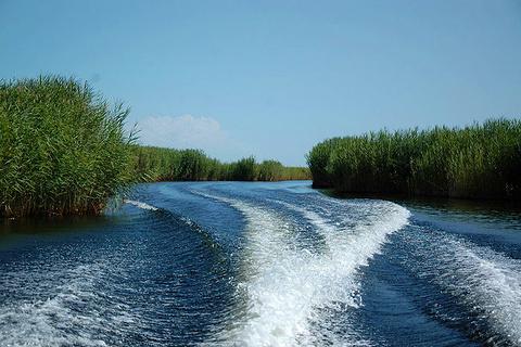 孔雀河的图片