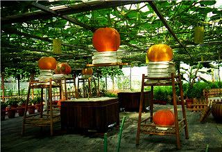 上海都市菜园