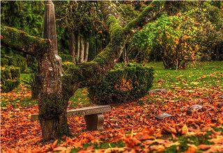 嘉定古树公园