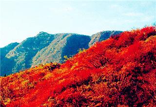 北宫森林公园