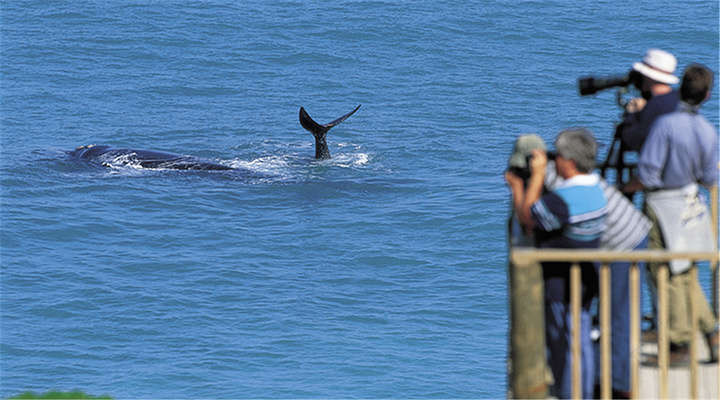 观鲸旅游图片
