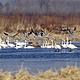 野鸭湖国家湿地公园