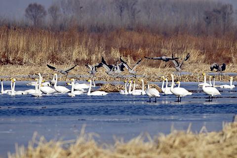 野鸭湖国家湿地公园的图片