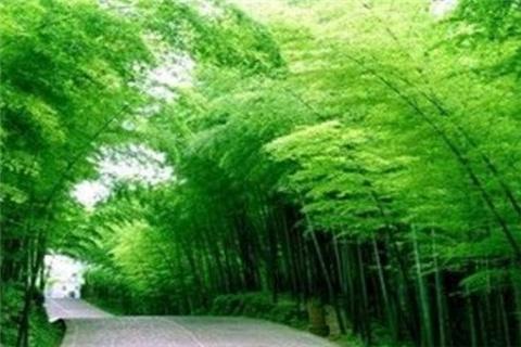 竹海大观的图片