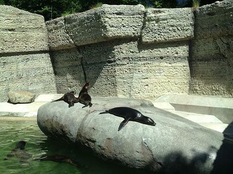 慕尼黑动物园的图片