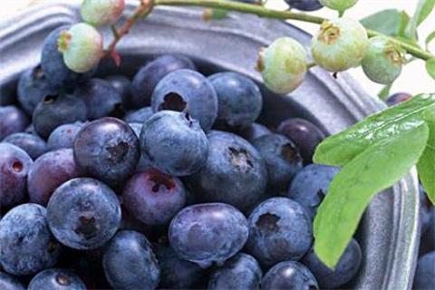 蓝莓种植园