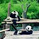 黑水河大熊猫自然保护区