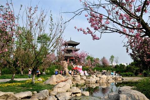 凤凰湖湿地公园的图片