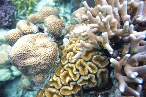 珊瑚花园的图片