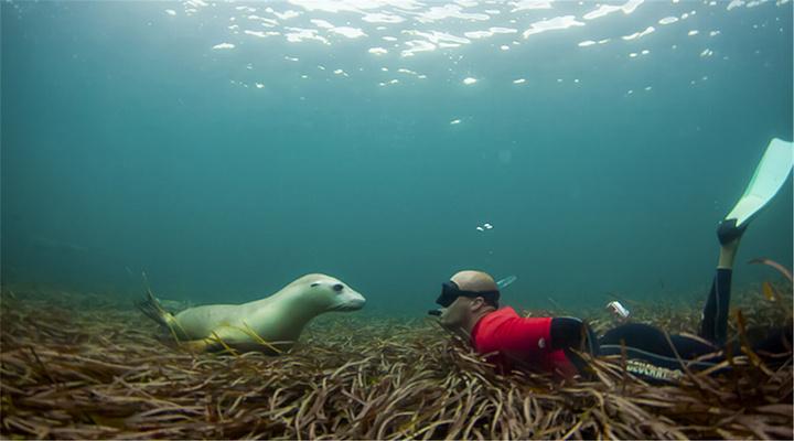 与金枪鱼同游旅游图片