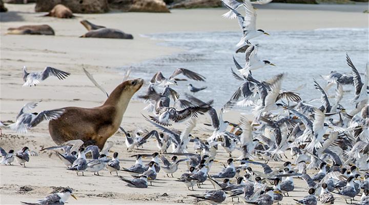 海豹湾旅游图片