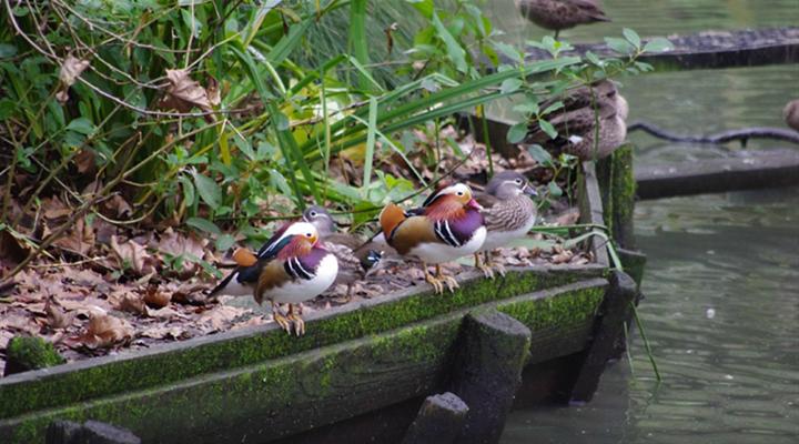 汉密尔顿动物园旅游图片