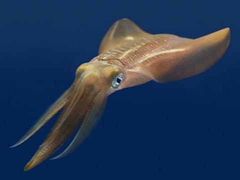 蒙特雷湾水族馆旅游景点图片