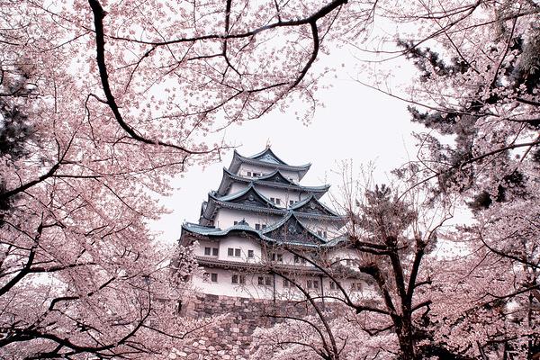 名古屋城堡旅游图片