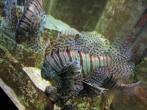 圣马洛水族馆旅游景点图片