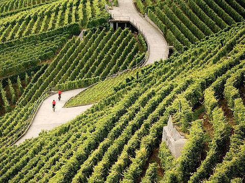 拉沃葡萄园梯田旅游景点图片