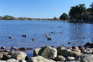 汉密尔顿湖