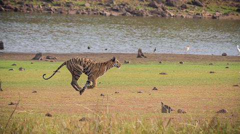 喜马拉雅动物园