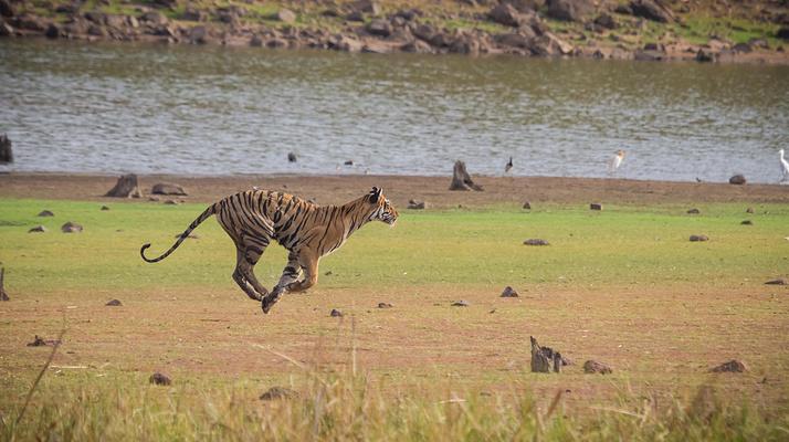 喜马拉雅动物园旅游图片