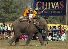 世界象球锦标赛 World Elephant Polo Championships