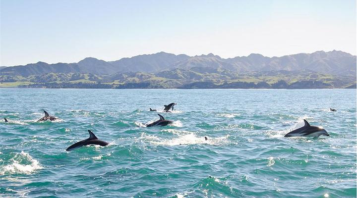 与海豚共游旅游图片