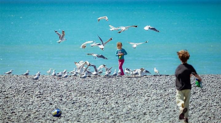 观鸟旅游图片