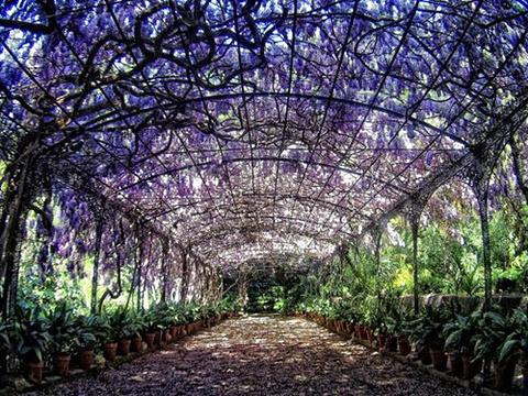 瓦伦西亚植物园旅游景点图片