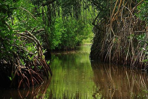 湿地自然公园