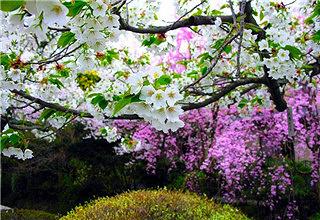西部兰花生态园