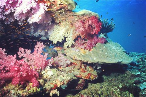塔韦乌尼岛旅游景点图片