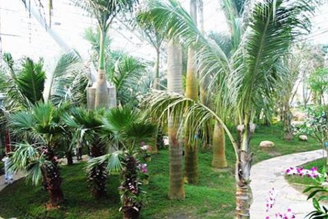 植物博览园
