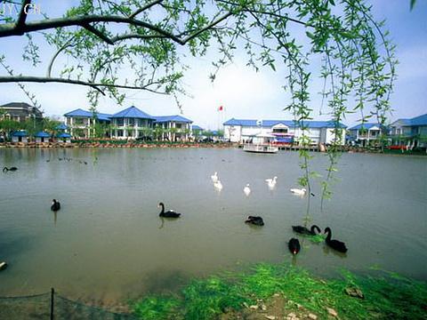 蒋巷村旅游景点图片
