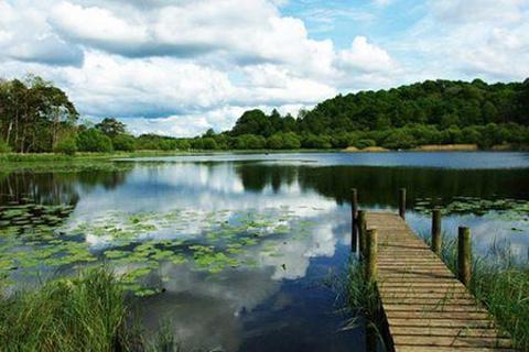 杭州湾国家湿地公园的图片