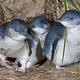 奥马鲁蓝企鹅保护中心