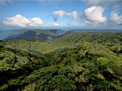 大风堡原始森林旅游景点图片